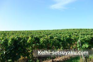 リューデスハイムブドウ畑