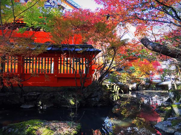 【京都山科】毘沙門堂や山科聖天の紅葉の見ごろや混雑状況をレビュー