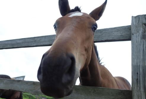 馬牧場巡り