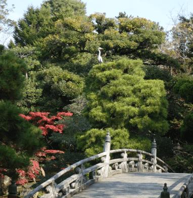 京都御所御池庭鳥
