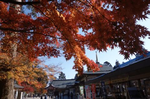 坂本ケーブルとシャトルバスで比叡山観光:クーポンやお得情報も