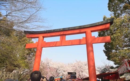 【京都】平野神社でお花見:近くで安いおすすめの駐車場は?