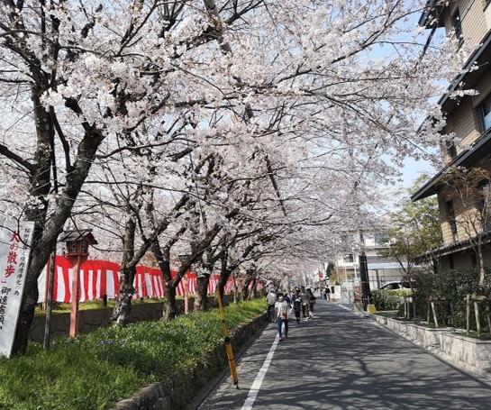 平野神社桜花見